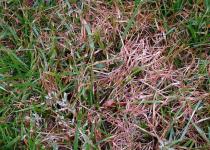 rooddraad in gras