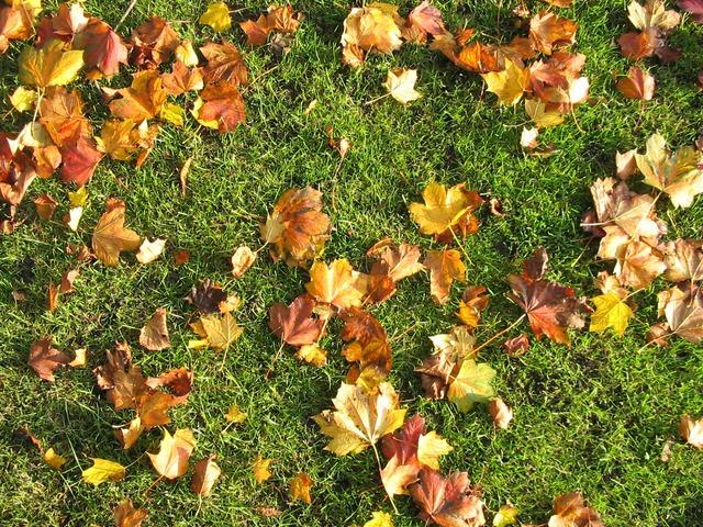 bladeren op het gazon in de herfst